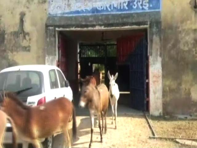 Video : Donkeys Jailed For 4 Days In Uttar Pradesh. Crime? Ate Expensive Plants