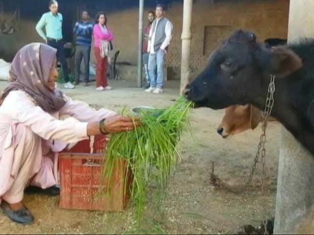 Video : राजस्थान में मवेशी तस्करी के नाम पर बढ़े मुठभेड़
