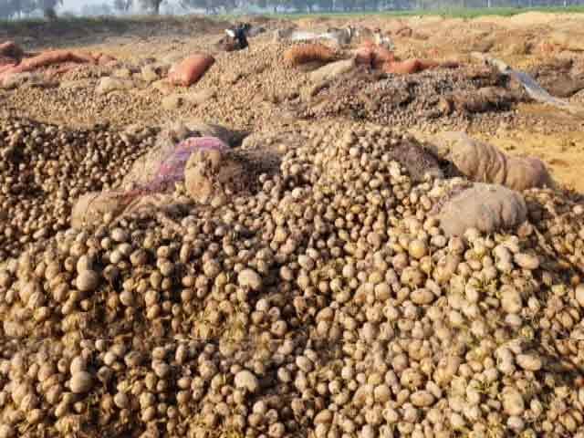 Videos : GROUND REPORT : यूपी में कौड़ियों के भाव आलू, किसान बेहाल