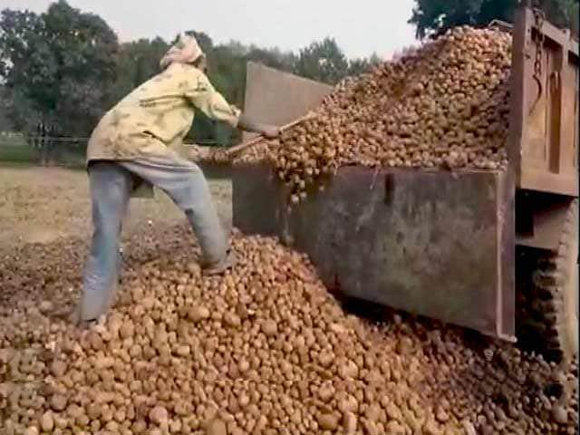 Videos : यूपी की सड़कों पर आलू, किसान बेहाल