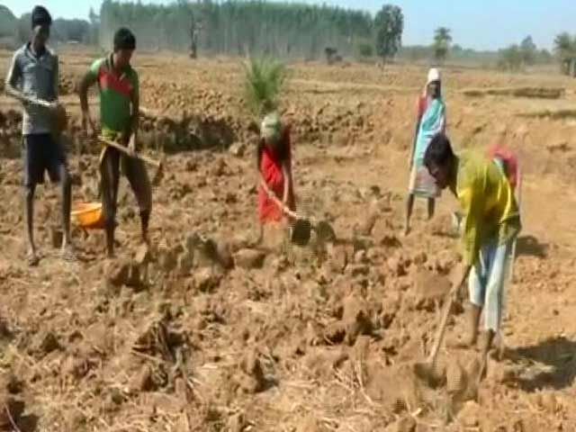 Video : Will Budget's Rural Sector Provisions Signal Better Days For Farmers