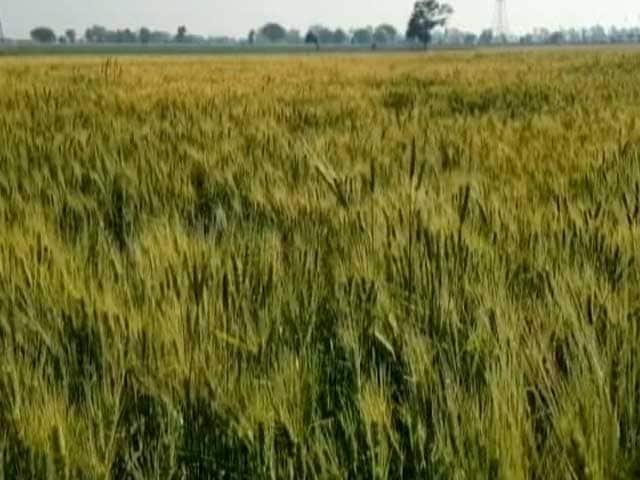 Video : डेढ़ गुना न्यूनतम समर्थन मूल्य या छलावा? क्या पूरा होगा सरकार का वादा?