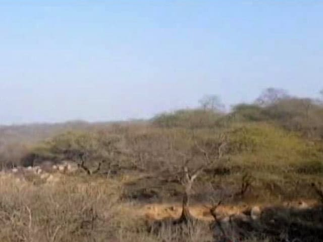 Video : Haryana's Forest That Is Not Listed As A Forest