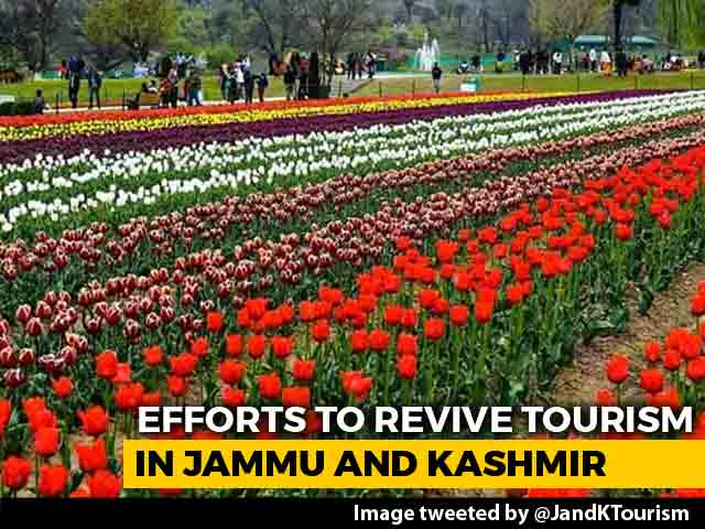 Video : Jammu And Kashmir Turns To Tulip Garden, Dal Lake To Revive Tourism