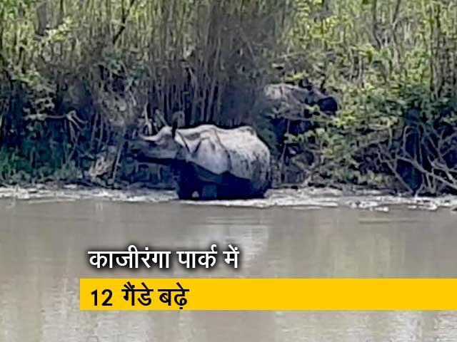 Video : गैंडों की आबादी में बढ़ोतरी, ग़ैरकानूनी शिकार बड़ी चुनौती