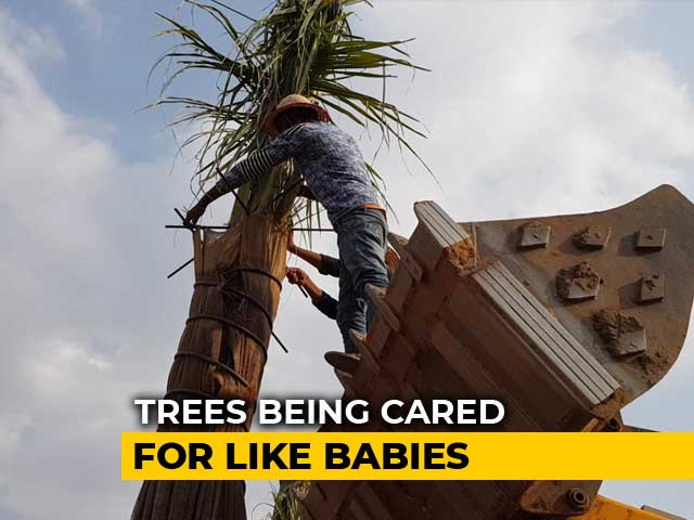 Video : A Telangana 'Hospital' That Gives Dying Trees A Second Life