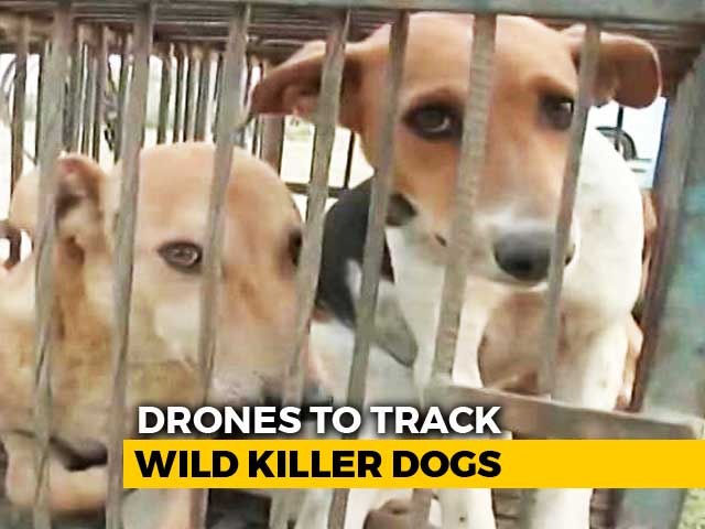 Video : After 12 Deaths, UP Police Uses Drones To Track Wild Dogs In Sitapur