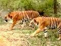 Video: सफारी इंडिया : जानवरों के संरक्षण में चिड़ियाघर की भूमिका