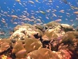 Video: The Magical Coral Reefs of Lakshadweep