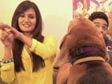 Video: Heavy Petting All Stars: Mukti, Neeti Mohan and the Star Pet Frodo