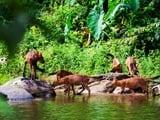 Video: Khao Yai National Park, Thailand