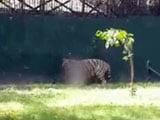 Video : Death in Delhi Zoo