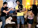 Video: Heavy Petting With Raqesh Vashisth, Ridhi Dogra and Their Adorable Pet Family