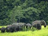 Video: Into The Wild: Khao Yai National Park, Thailand