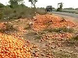 Video : बेमौसम बारिश से पहले ही पके संतरे, नहीं मिल रहे खरीददार
