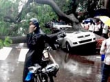 Video: Heavy Rain in Mumbai Causes Extensive Damage, Trees Fall