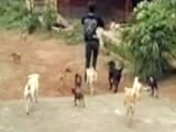 Video : Activists Call for Kerala Boycott as Government Refuses to Stop Culling of Street Dogs