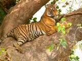 Video : इंसानों और बाघों के बीच संघर्ष खत्म करने की चुनौती