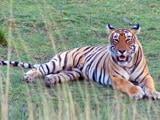 Video : भारत में बाघों की संख्या के आकलन की प्रक्रिया