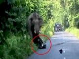 Videos : पश्चिम बंगाल : हाथी ने किया हमला, बाइक सवार बाल बाल बचे