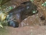 Video : केरल : 15 फुट गहरे कुएं में गिरे हाथी के बच्चे को यूं बचाया गया