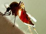Video : रिपोर्ट :  जानें डेंगू किस तरह से हमारे शरीर पर हमला करता है
