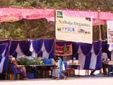 Video: The Green Army is Setting Up a Mela Called - Millet Mela