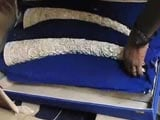 Video : 480 kg Ivory Seized From Delhi, at Least 18 Elephants Were Killed For it