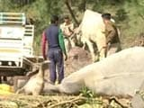 Video : Man Arrested For Lynching of Alleged Cattle Smuggler in Himachal Pradesh
