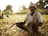 Video : Reasons Behind the Alarming Rate of Farmer Suicides in India