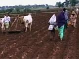 Video: कल्टीवेटिंग होप : काउंसिलिंग से किसानों के रुख़ में बदलाव