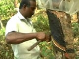 Video : Ahead Of Elections, Kerala's Rubber Crisis Turns Political