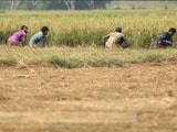 Video : Weather Insurance for India's Farmers