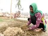Video: कल्टीवेटिंग होप : कृषि क्षेत्र में आगे आती महिला किसान