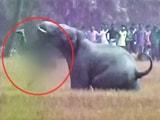 Video : पश्चिम बंगाल के बर्धमान जिले में हाथियों का उत्पात, 5 लोगों की मौत