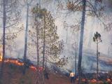 Video: इंडिया 9 बजे : आग से धधक रहे हैं जंगल, हज़ारों गांवों के लोग परेशान