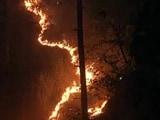 Video : नेशनल रिपोर्टर : जंगल की आग में धधकता उत्तराखंड