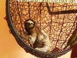 Video: #GLAadventure's Day Out At The Sloth Sanctuary, Puerto Viejo