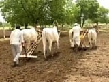 Video : Drought-Hit Marathwada: Monsoon Delayed, Farmers Frantic