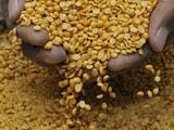 Video : महाराष्ट्र में गरीबों के लिए 120 रुपये से महंगी नहीं बिकेगी तुअर दाल