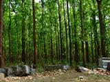 Video : वन रहेंगे तो हम रहेंगे : कैम्पा क़ानून पर सरकार का कांग्रेस से तालमेल