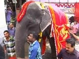 Video : In Kerala, An 86-Year-Old Elephant Caught In The Middle Of Traditions