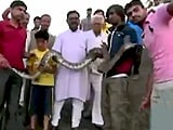 Video : Rajasthan Man Tries Snapping Selfie With A Python. Does Not Go Well