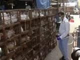 Video : दिल्ली : बर्ड फ्लू से निपटने के लिए एडवाइजरी, कच्चा अंडा और अधपका मांस न खाने की सलाह