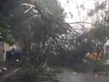 Video : बड़ी खबर : चेन्नई के पास समुद्र तट से टकराया 'वरदा' तूफान