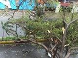 Video : Cars Wrecked, Tress Uprooted As Cyclone Vardah Strikes Near Chennai