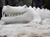 Video : Auto-Rickshaw, Crocodile: How Kashmiri Kids Are Breathing Life Into Snow