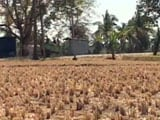 Video : As Karnataka Heads For Another Drought, Farmer Family Struggles To Repay Loan