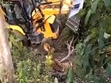 Video : On Camera, Tiger Crushed Near Corbett Park. Earthmover Used In Capture