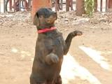 Video : 50 खोजी कुत्तों को हराकर नंबर 1 खोजी कुत्ता बना RPF का बिंगो